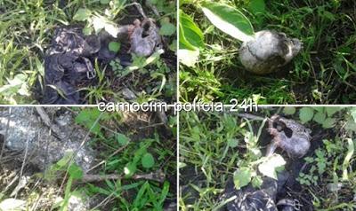 PM's de Chaval encontram ossada humana no distrito de Retiro.