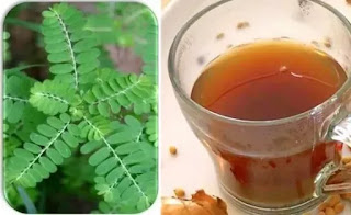 Phyllanthus amarus syrup