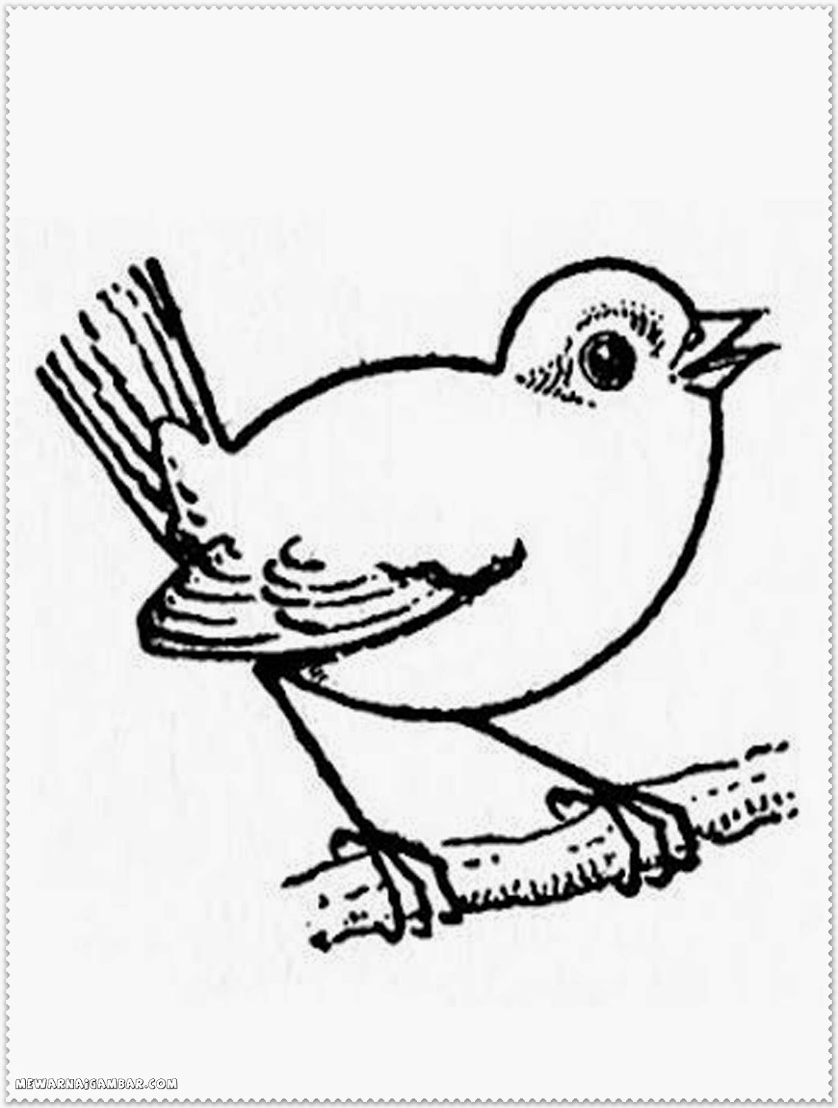Bird Coloring Pages Blue Jay