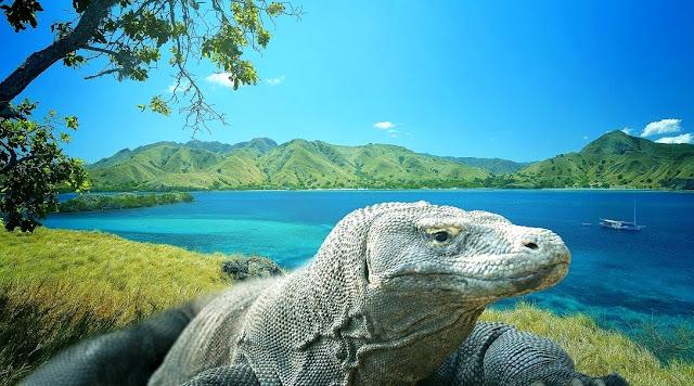 Hewan Komodo di Labuan Bajo Pulau Komodo