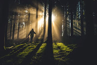 Forest Shadows by Kiwihug on Unsplash