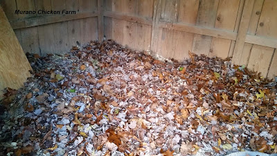 Which chicken coop bedding should you use? Dried leaves are a great free option