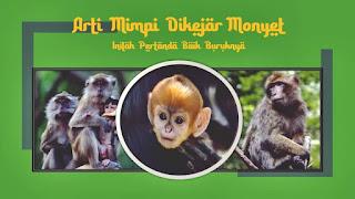 arti mimpi dikejar monyet
