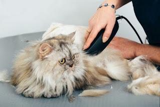 Harga Grooming Kucing Panggilan