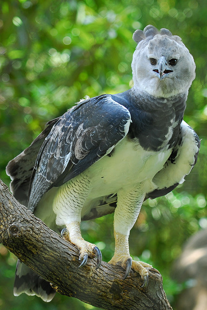 Mexico Harpy Eagle | Experience Traveling In Mexico