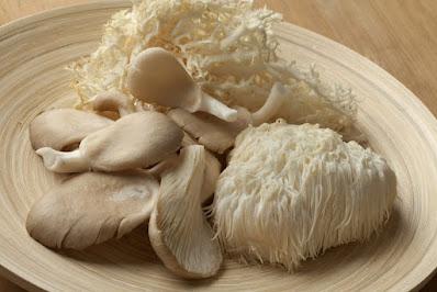 Lion's mane mushroom growth stages