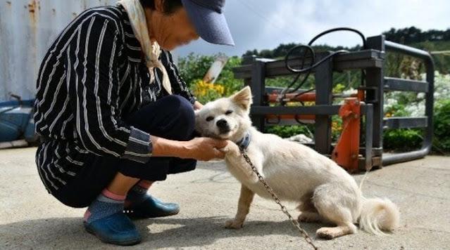 Пёс спас 93-летнюю старушку от смерти, согревая её в течение двух дней, пока их не нашли спасатели
