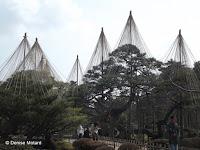 Giant winter 'tents' above trees - Kenroku-en Garden, Kanazawa, Japan