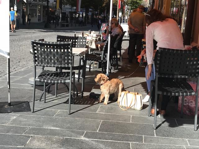 スイスのブリークの町のオープンカフェにいた犬