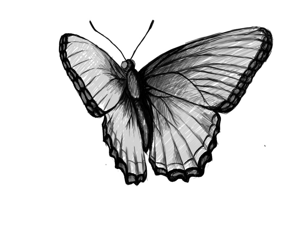 Butterfly Flying Drawings