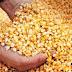 Reflexiones - El agricultor y las mejores semillas