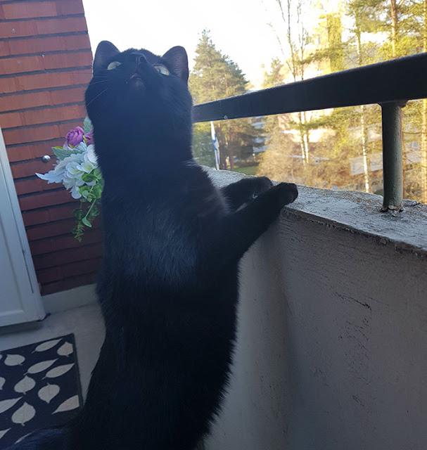 Gato que nunca tinha saído de casa tem reação hilária quando pisa na   varanda pela primeira vez