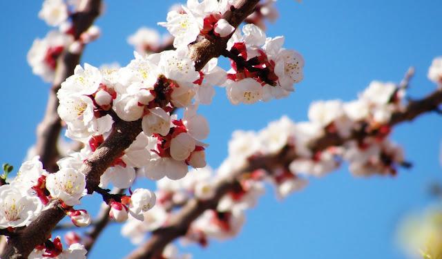 download besplatne pozadine za desktop 1024x600 cvijeće proljeće