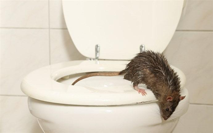 klozetten fare çıkmaması için ne yapmalı ?
