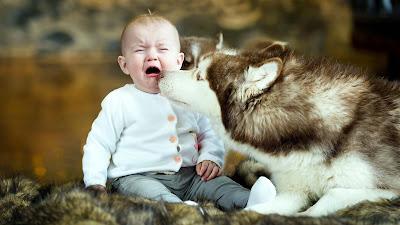 dog-playing-with-crying-babyboy