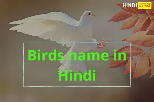 Birds name in Hindi
