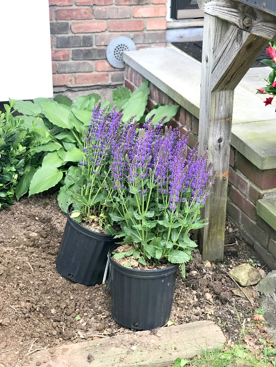 purple flowers ready to be planted