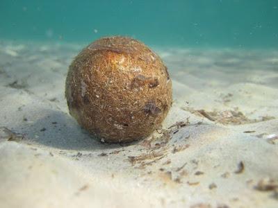 a neptune ball lying on the ocean floor