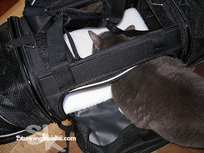 Checking Out Smiling Paws Pets' Expandable Soft-Sided Pet Carrier #sponsored