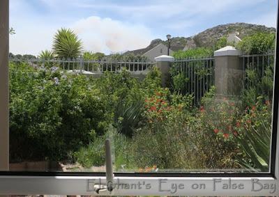 Smoke from Noordhoek wetland fire