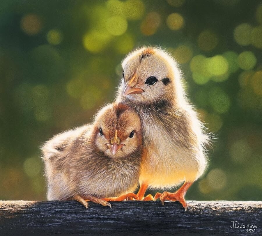 07-Chicks-sticking-together-Julia-Dubinina-www-designstack-co