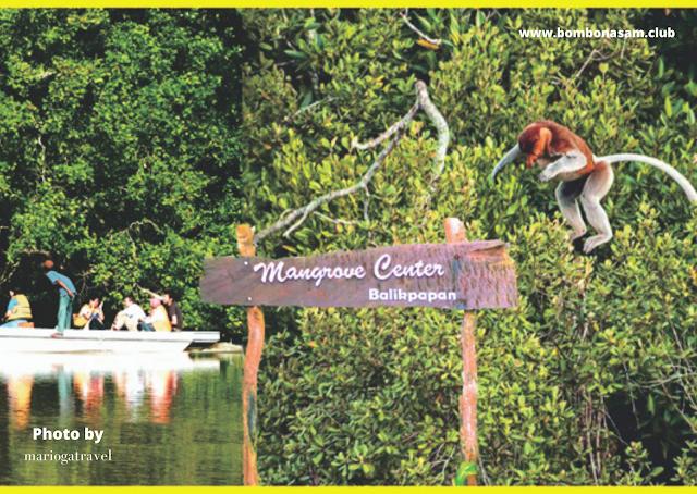 Mangrove Center Balikpapan