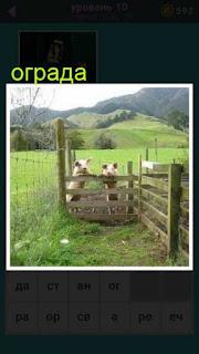 свиньи за оградой в загоне хотят выйти на волю 667 слов 10 уровень