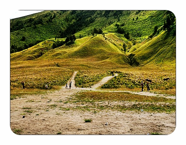 Objek Wisata Padang Rumput Savana Bromo