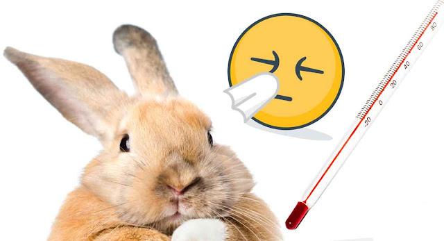 tanda tanda kelinci terserang penyakit