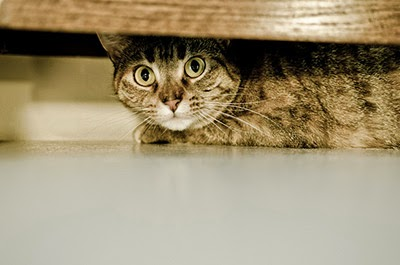 Scared cat hiding underneath furniture