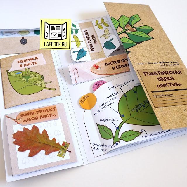 файлы для распечатки лэпбука листья