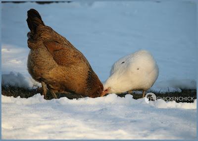 The Chicken Yard