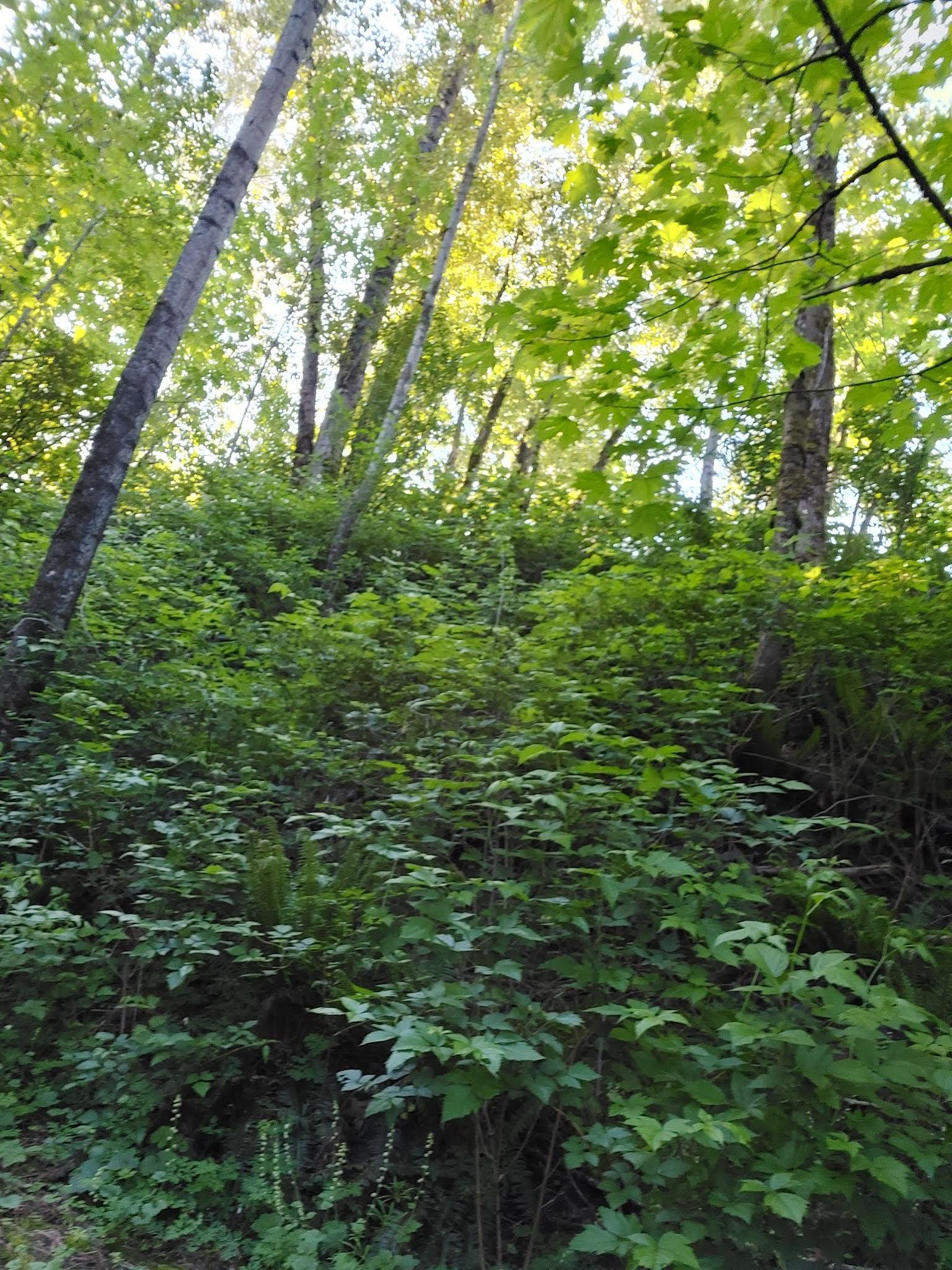 Forest lush green sorounding