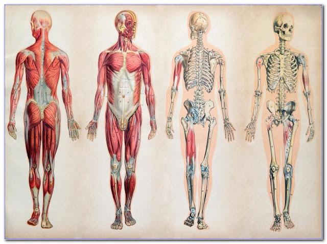 Anatomy Courses