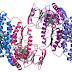 Biochimie structurale: Acide aminé et Protiene