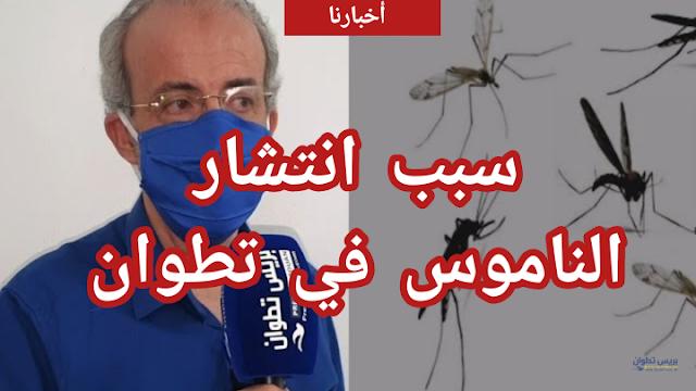مستشار بالجهة يشرح أسباب انتشار البعوض بمدينة تطوان