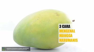 Harumanis,rupa bentuk harumanis,tips membeli mangga harumanis,harumanis perlis,jus harumanis,aiskrim harumanis,pelam harumanis,harga harumanis 2017 ,harga harumanis ikut gred