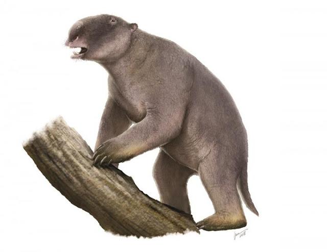 Megafauna extinction mystery - size isn't everything