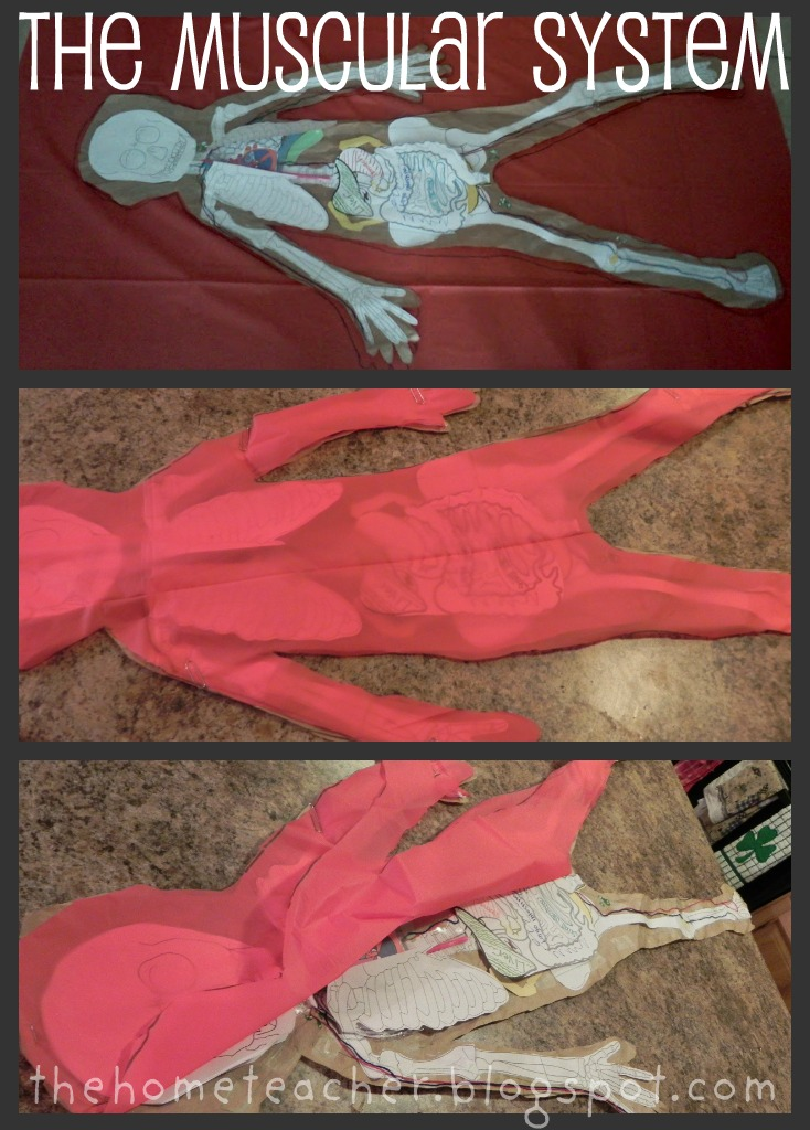 The Home Teacher Human Body Printables