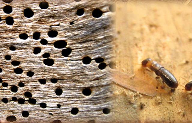 tratamientos contra termitas Valladolid
