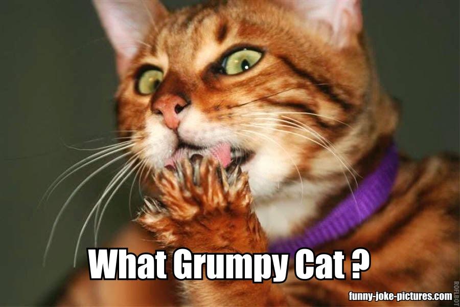 What Grumpy Cat?