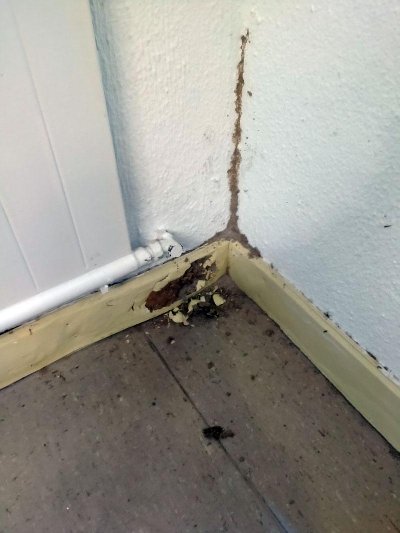 tratamientos termitas Pamplona