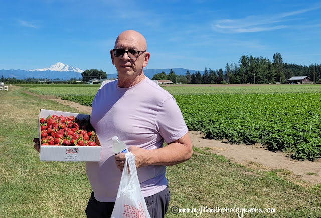 He picked the most strawberries on Father's Day