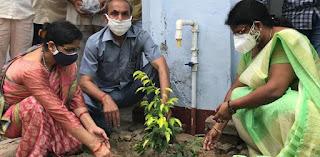 राज कालेज में हुआ वृक्षारोपण  | #NayaSaberaNetwork