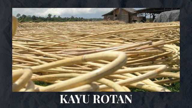 Kayu Rotan untuk mebel