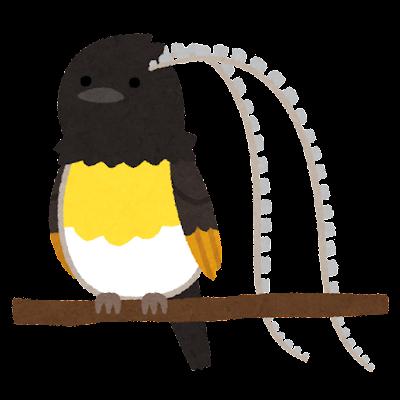 フキナガシフウチョウのイラスト