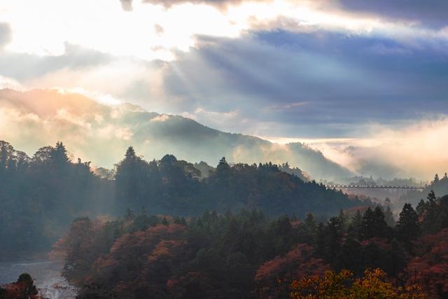 Floresta de Okutama é uma excelente opção para ter a experiência do banho de floresta Nack7/Shutterstock.com