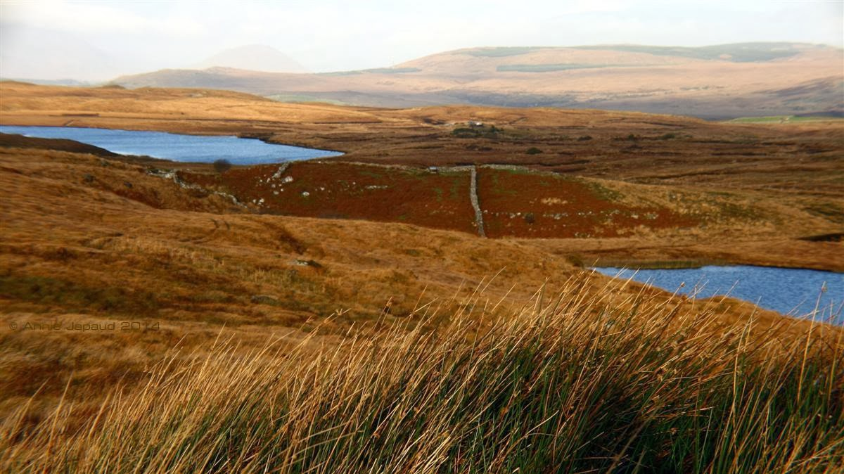 Connemara landscape, with mountains, lakes and beautiful coloured grasses