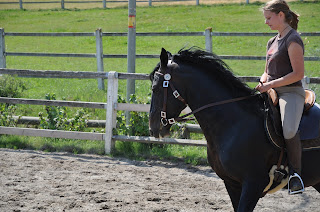 A black dressage horse being ridden in an outdoor school