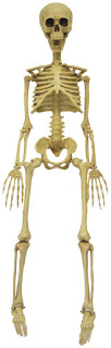 3' Realistic Skeleton for Halloween